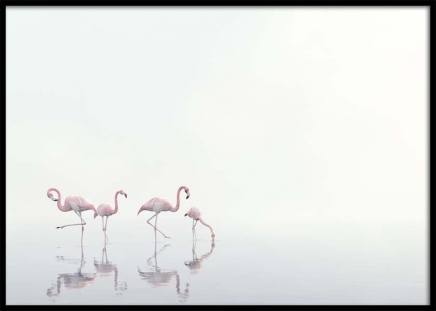 Flamingos on Foggy Water Poster in der Gruppe Poster / Naturmotive bei Desenio AB (10447)