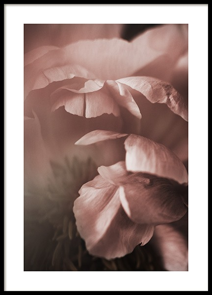 Soft Peony Poster in der Gruppe Poster / Fotografien bei Desenio AB (10992)