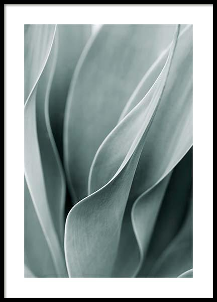 Agave Leaves No3 Poster in der Gruppe Poster / Fotografien bei Desenio AB (11661)