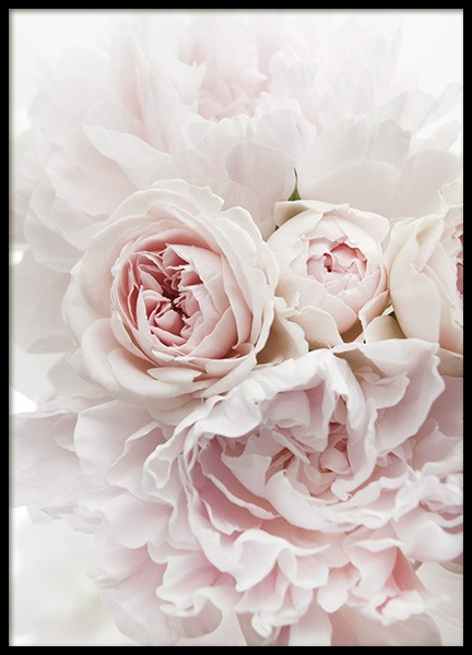 Peonies and Roses Affiche dans le groupe Affiches / Photographie chez Desenio AB (11791)