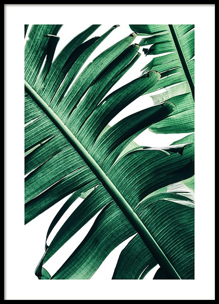 Banana Palm Leaves No2 Poster in der Gruppe Poster / Fotografien bei Desenio AB (12053)