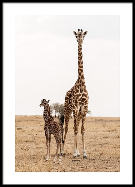 Mother and Baby Giraffe Affiche dans le groupe  chez Desenio AB (12578)