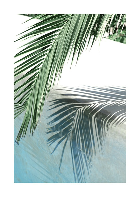Poolside Palm Reflection Poster / Fotografien bei Desenio AB (10666)