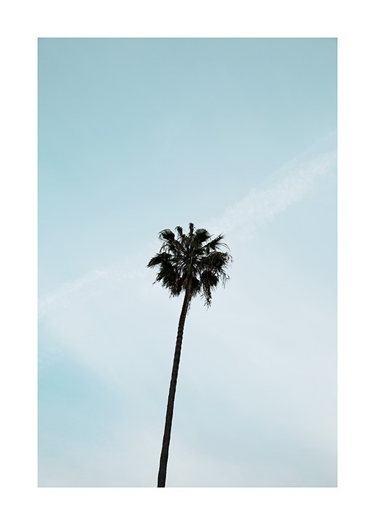 Palm Tree Poster / Naturmotive bei Desenio AB (10955)